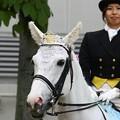 写真: 川崎競馬の誘導馬05月開催 誕生日記念レースVer-06-large