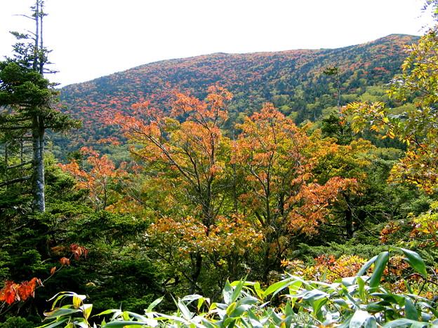 薬師岳・北面の紅葉