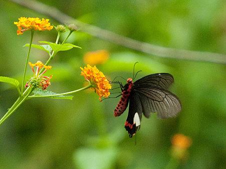 ドイステープの蝶 IMGP124963_R