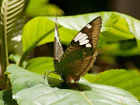 ドイプイの蝶 IMGP125397_R