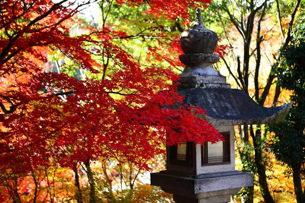 Photos: 『秋深く。。。』