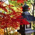『秋深く。。。』