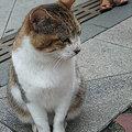 Photos: 09,07,22江ノ島ニャンコ-1