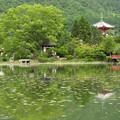 大沢池2012初夏_1