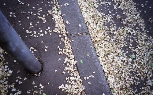 道路に溜まる白