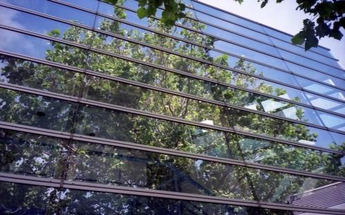 ガラスに映る自然
