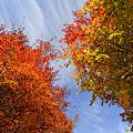 秋が流れる…。
