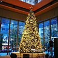 丸ビル クリスマスツリー2009
