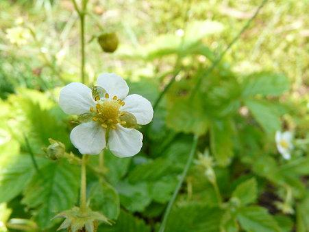 2009-5-20 庭の花・はな・華 (2)おいしい!をくれる花たち