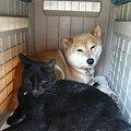 Photos: あつ あつ・・