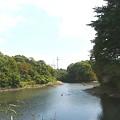写真: カルガモたちが遊ぶ沼