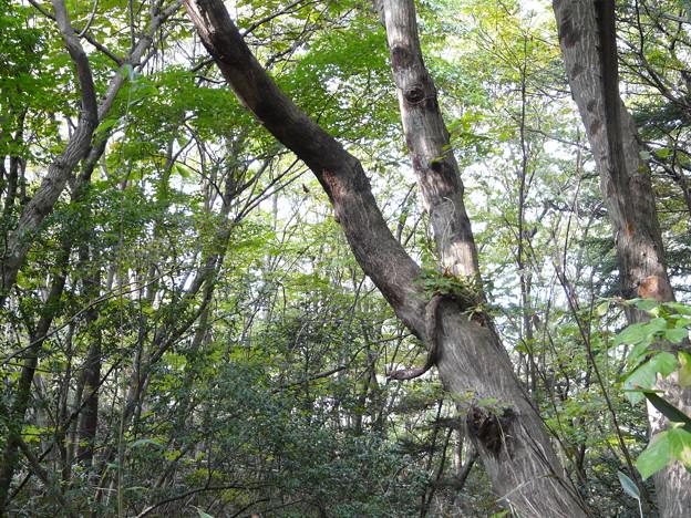 写真: 長命館公園4