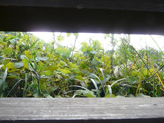 写真: 長命館公園10