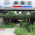 Photos: 森松避溢橋
