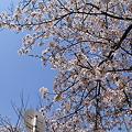 Photos: IMG_2011_04_10_1458