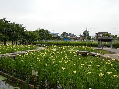 千貫樋水郷公園 (8)