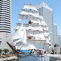 Photos: 日本丸 総帆展帆