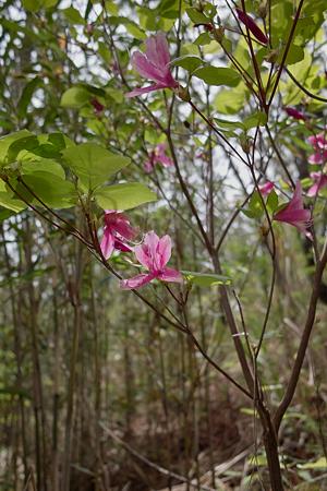 Flower05132011dp1-02