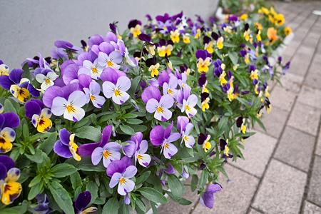 flower05182011dp1-01