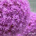 Photos: 咲き誇り