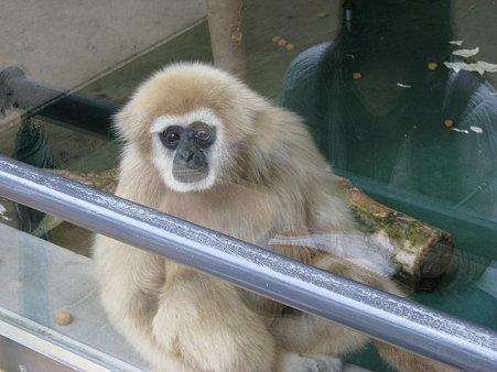 動物園@KYOTO