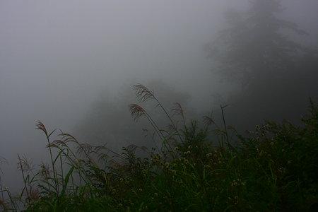 霧の中で! 証拠写真(笑)