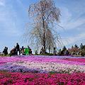Photos: 芝桜の丘