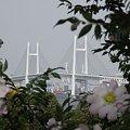 写真: R0014075 - ベイブリッジの初夏