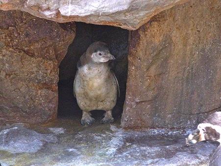 20120506 宮島 フンボルランチのアンディ02