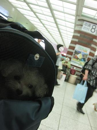 東京駅です