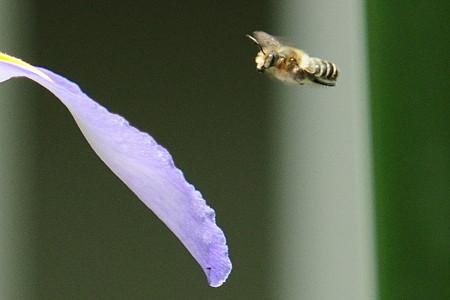 ぶんぶんぶん蜂が飛ぶ
