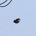 写真: 雀のジョナサン(笑