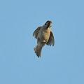 写真: スズメが飛んでやって来た
