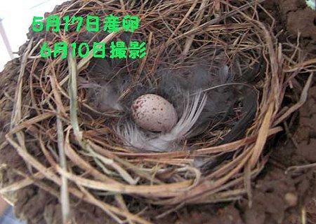 孵らない卵