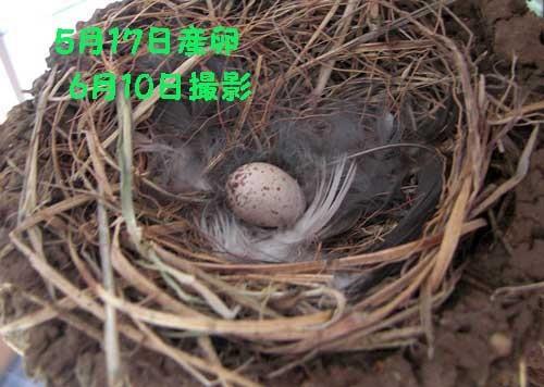 Photos: 孵らない卵