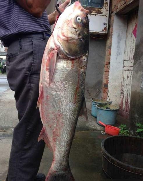 豪快な魚獲り&でかすぎる魚さん達(笑) (13)