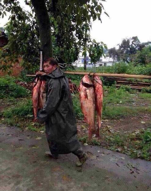 豪快な魚獲り&でかすぎる魚さん達(笑) (14)