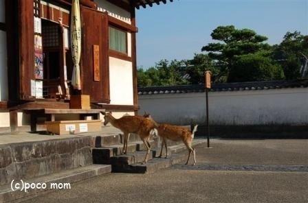東大寺三昧堂(四月堂)36