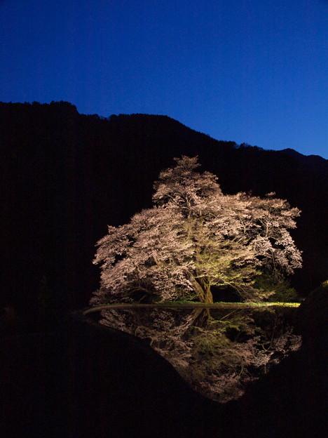 「駒つなぎの桜」ライトアップ。空を入れて♪
