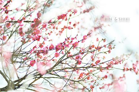 花咲ける・・・。
