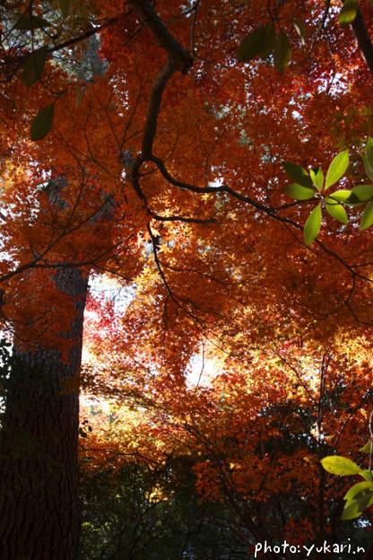 Photos: 森の中で