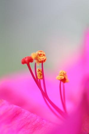 オリジナルの花