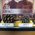 Photos: 五稜郭の赤松&歳三嘆きの黒松