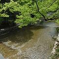 Photos: 20110502_伊勢神宮 内宮(皇大神宮) 風日祈宮橋
