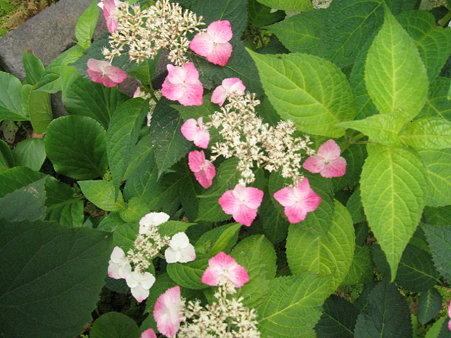 鎌倉で見たお花4