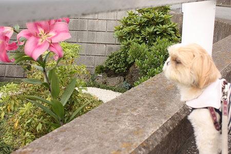 お花とくるみ2