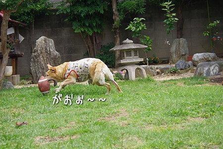 s-myu2009_0626(063)