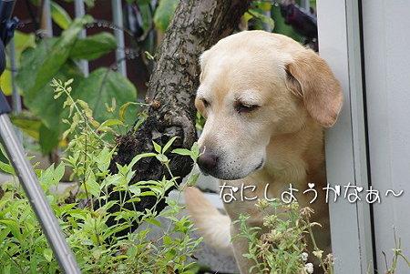 s-myu2009_0630(007)