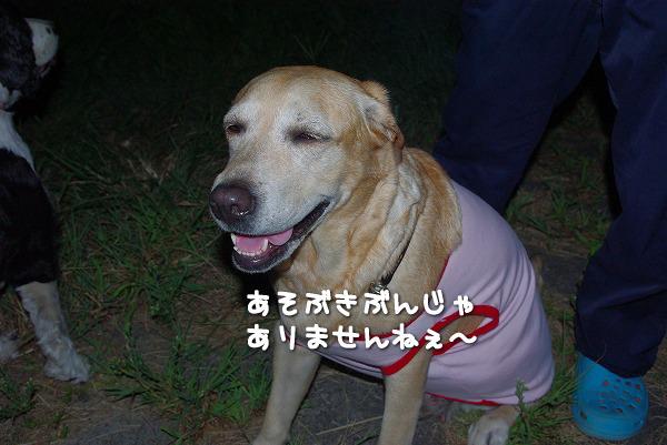 s-myu2009_0831(024)