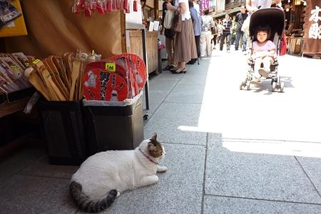 帝釈天の猫